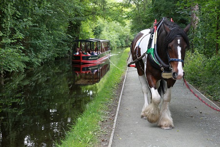Llangollen Horse Drawn Canal Cruise to the Horseshoe Falls